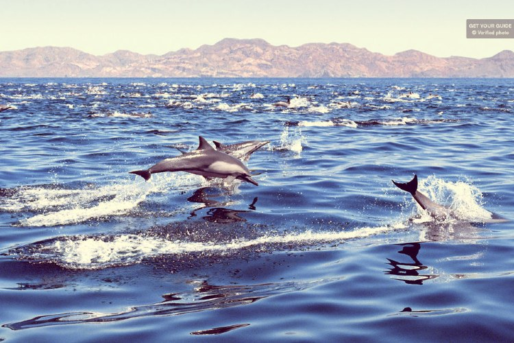 Qué ver en las Islas Canarias. Delfines Gran Canaria