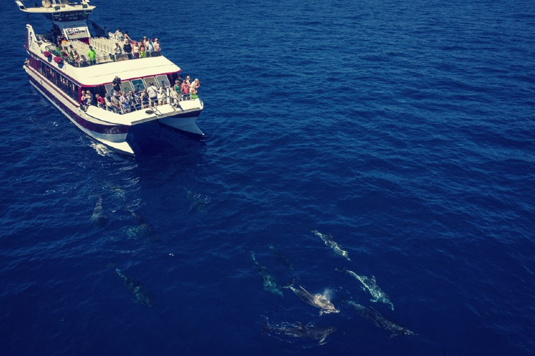Qué ver en las Islas Canarias. Excursión en barco por Tenerife