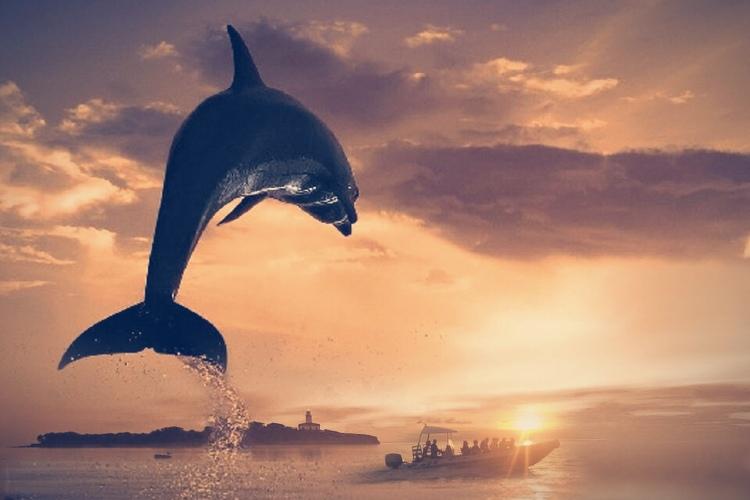 Delfines Alcudia Mallorca